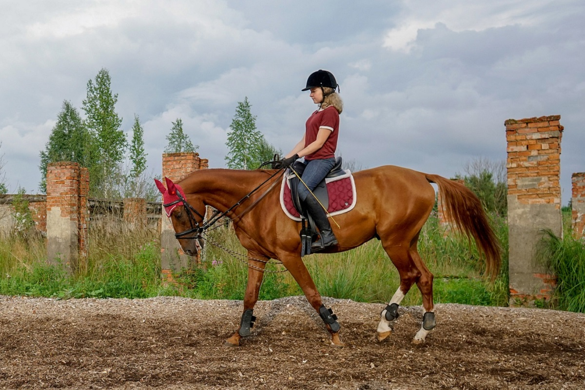 Funktionale Anatomie des Pferdes - Pferde.de Magazin
