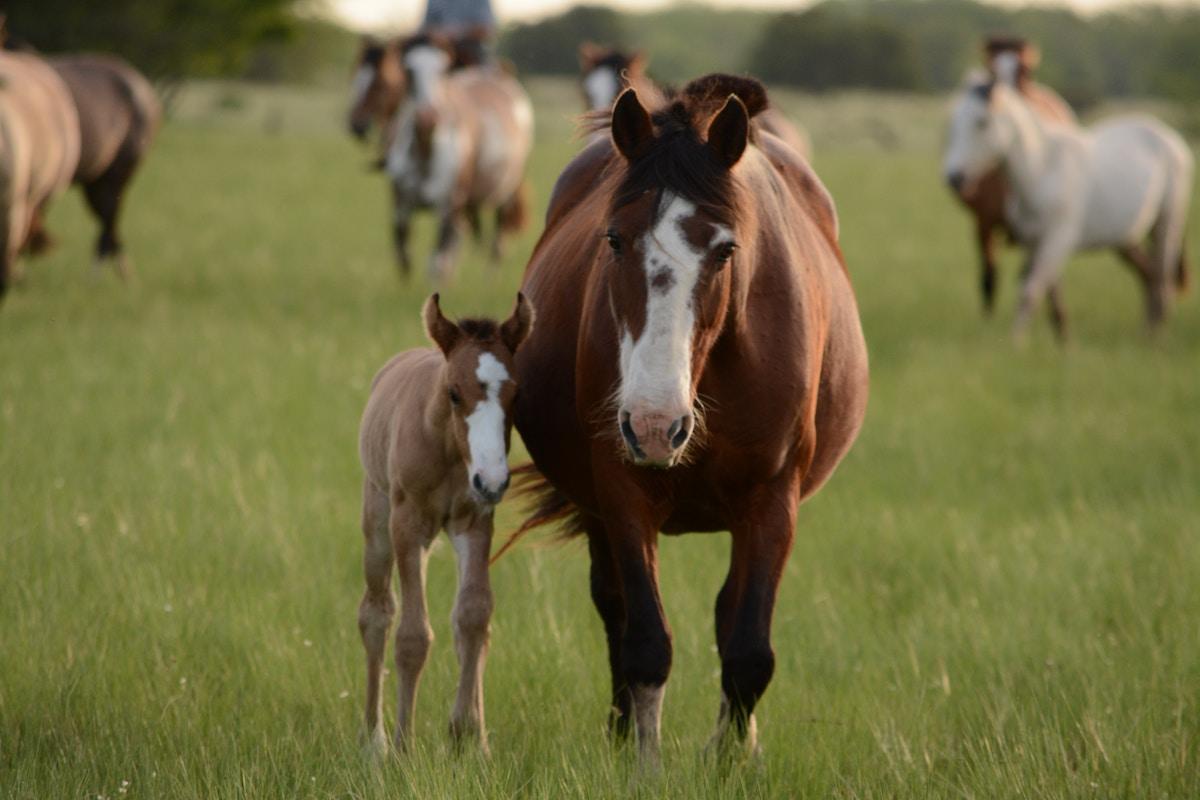 Pferd Kaufen Kassel